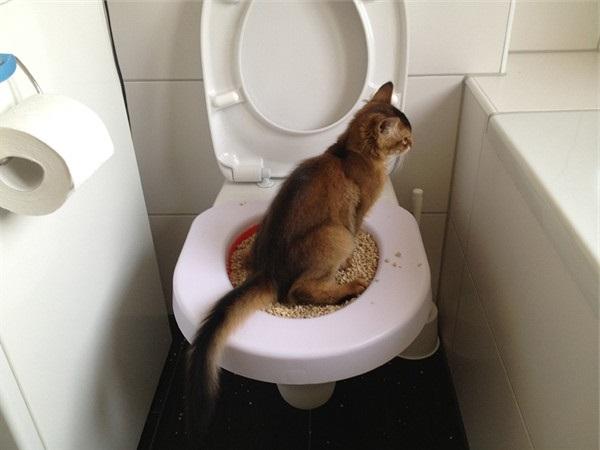 Туалетная романтика: животные, которые делают это аккуратнее людей  животные, милота, приучили к туалету, умные животные, фото