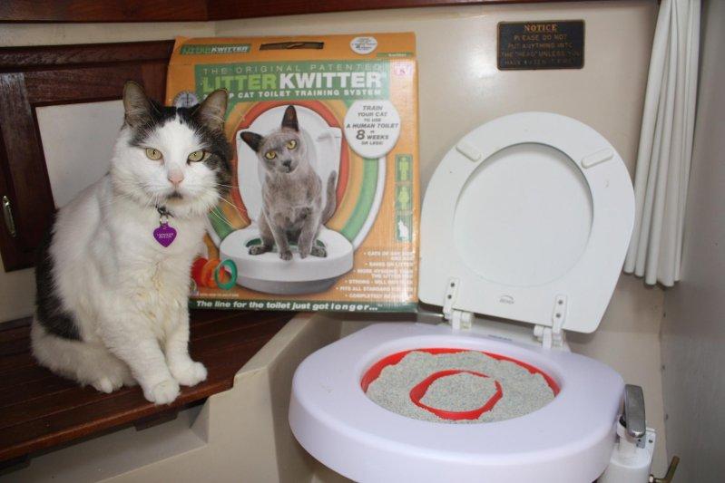 Для начала можно ставить специальный лоток  животные, милота, приучили к туалету, умные животные, фото