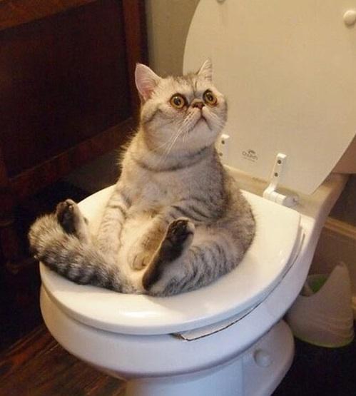 Тут, конечно, картонка, но чтобы такого не случилось с вашим умным питомцем, ему нужна практика  животные, милота, приучили к туалету, умные животные, фото