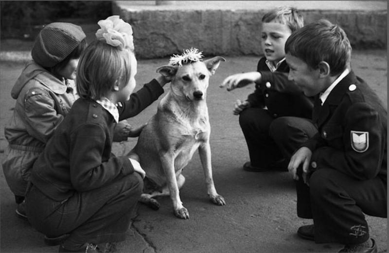 Как жилось собакам в Советском Союзе? животные, интересное, собаки