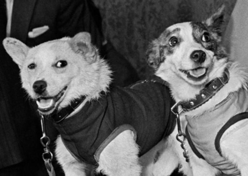 Знаменитые собаки Белка и Стрелка  животные, интересное, собаки