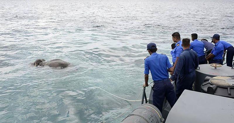Военнослужащие ВМС Шри-Ланки спасли унесенного в море слона видео, вмс, животные, море, слон, спасение, шри-ланка