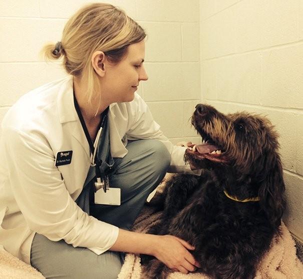 20 фото-доказательств того, что ветеринар - замечательная профессия братья наши меньшие, ветеринар, врач, доктор, животные, питомцы, работа, фото