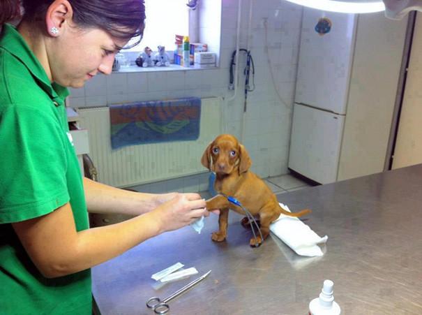 Одно из обязательных качеств ветеринара - высокая степень ответственности. Пациенты могут быть крошечными! братья наши меньшие, ветеринар, врач, доктор, животные, питомцы, работа, фото