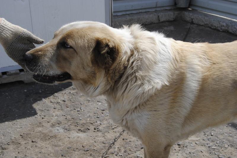 Во время визита я познакомилась с некоторыми собаками, ждущими своих хозяев.  животные, интересное, омск, помощь, приют, собаки, спасение