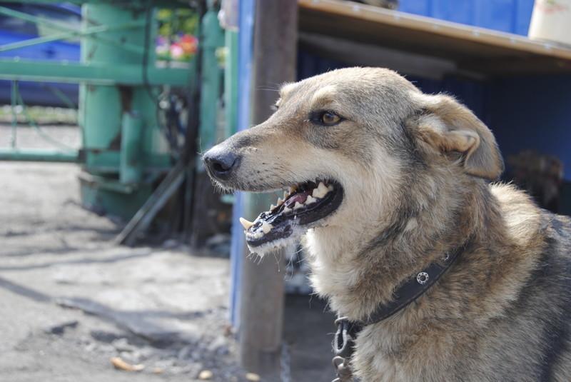 Я навестила этот приют, и теперь хочу поделиться с вами своими впечатлениями...  животные, интересное, омск, помощь, приют, собаки, спасение