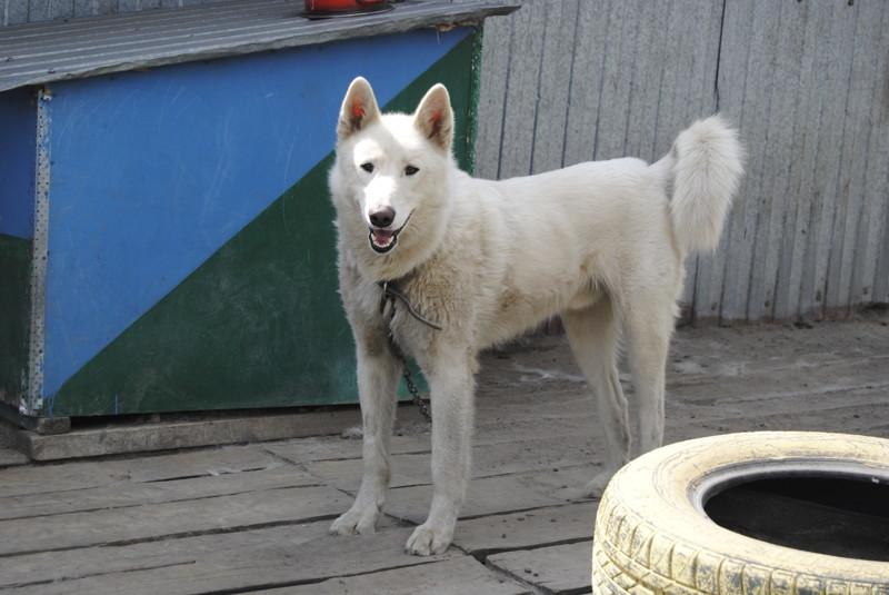 Омские беспризорные собаки и люди с большим сердцем животные, интересное, омск, помощь, приют, собаки, спасение