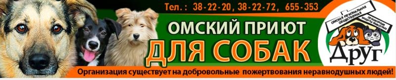 """<p><a href=""""http://dog-omsk.ru/"""">Омский приют Друг всегда нуждается в помощи.</a></p> животные, интересное, омск, помощь, приют, собаки, спасение"""