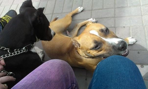 Эта история одна из десятков историй, которые я могу рассказать, но итог всегда один.  животные, защита, кошки, собаки