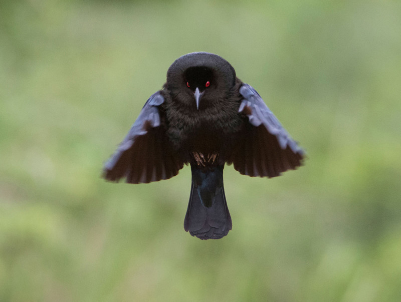 Прекрасные птицы от прекрасных фотографов америка, анималисты, птицы, фотография, фотоконкурсы