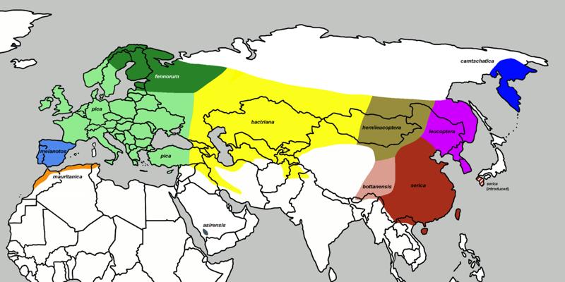 20. Сороки населяют всю Европу от Нордкапа в Скандинавии до южных оконечностей Испании и Греции. Она отсутствует только на нескольких островах Средиземного моря. Также населяет части прибрежных областей Марокко, Алжира, Туниса на севере Африки. животные, интересно знать, птицы, сорока, факты