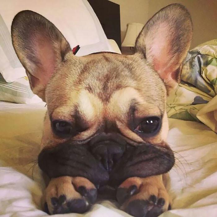 Собачьи щечки, перед которыми невозможно устоять животные, животные  фото, мило, собаки, фото