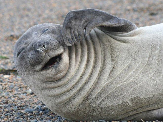 Тюлень картинка прикол, надписью