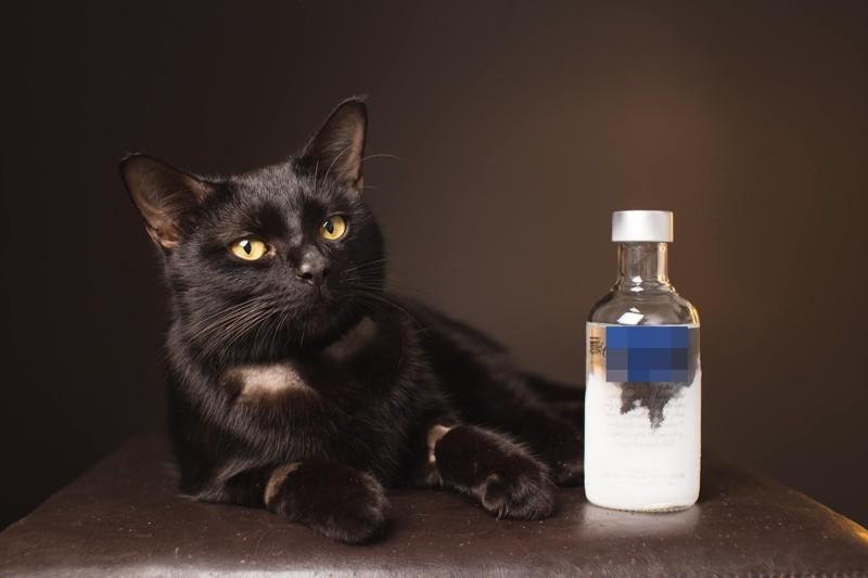 Кошка, которую в честь пережитых событий назвали Типси («Поддатая»), была найдена возле склада шин на выходных антифриз, в мире, водка, животные, коты, кошка, спасение