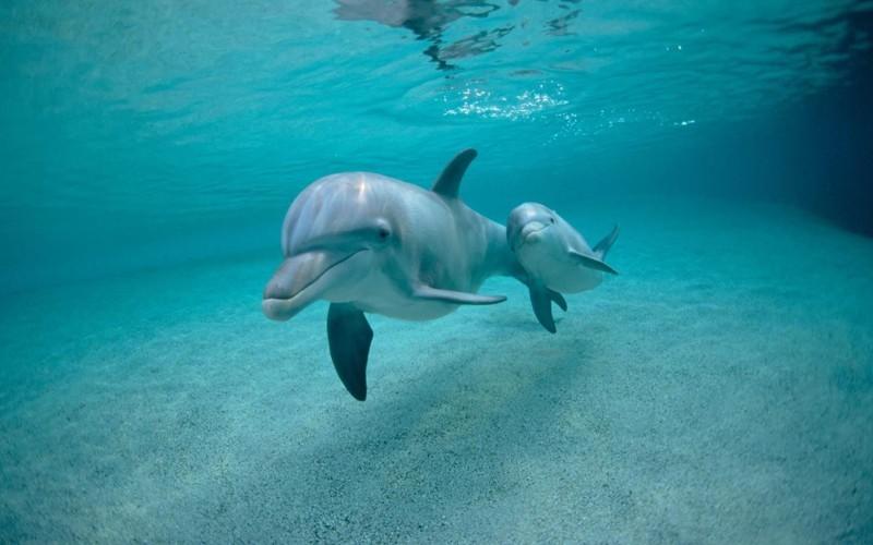 Дельфины животные, интересные факты, необычно, поведение, сон, факты