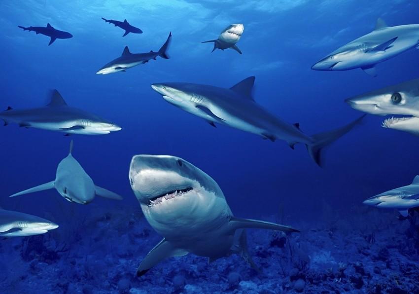 Акула животные, интересные факты, необычно, поведение, сон, факты
