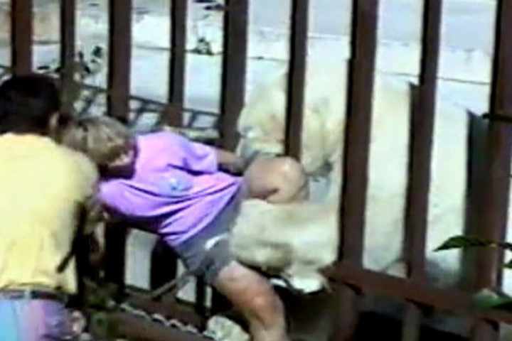 3. Нападение белого медведя на посетительницу зоопарка в Анкоридже, 1994 г. дикие животные, нападение медведя, нападение хищника
