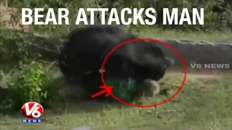 8. Нападение медведя на лесника в штате Чхаттисгарх, Индия, 2014 г. дикие животные, нападение медведя, нападение хищника