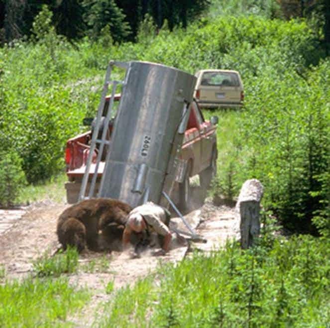 1. Нападение гризли на егеря в Йеллоустонском парке, 1987 г. дикие животные, нападение медведя, нападение хищника