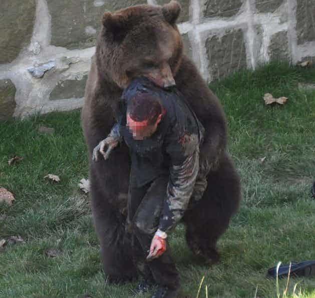 2. Нападение бурого медведя на человека в швейцарском Медвежьем парке, 2009 г. дикие животные, нападение медведя, нападение хищника