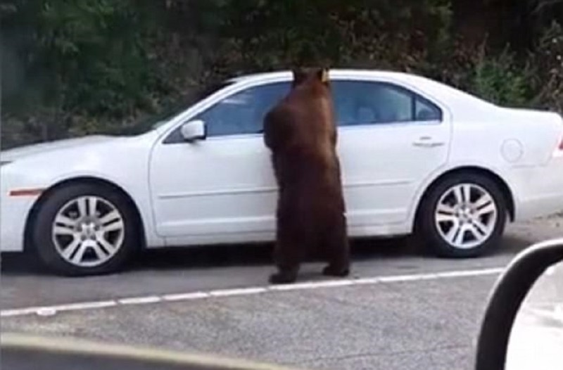 Картинки для детей медведь  Картинки Detkitoday