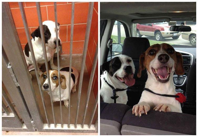 1. Эти двое по-прежнему ищут семью , а пока их взяли на передержку после, приют, семья, собака
