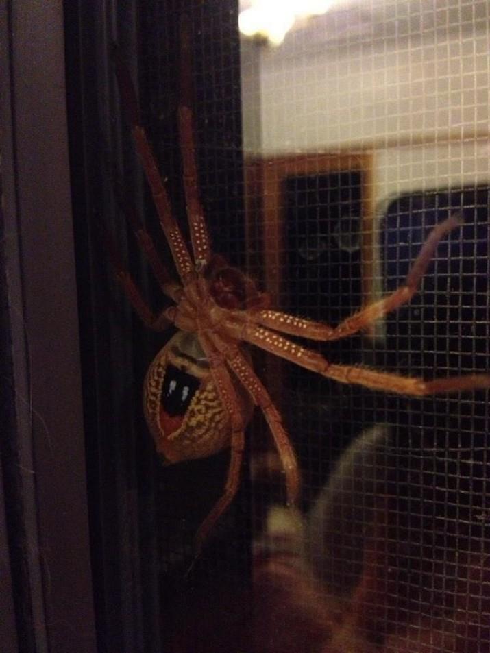 И когда ЭТО просто приходит в твой дом австралия, в мире, животные, насекомые, подборка, прикол, юмор