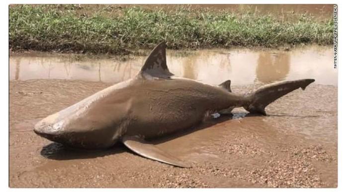 Когда акулам становится скучно жить в океанах австралия, в мире, животные, насекомые, подборка, прикол, юмор