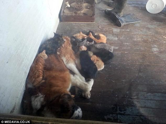 Пёс-приют добро, пес коты, приют