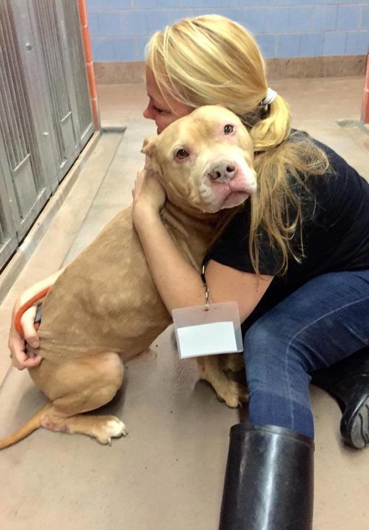Хозяева сдали умирающего пса в приют животные, приют, смерть, собака