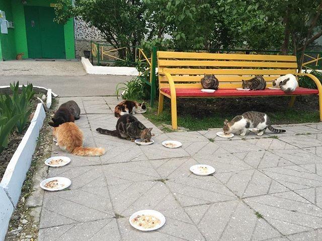 Обед в кошачьем профилактории двор, забота, кормежка, коты, лестница, прикол