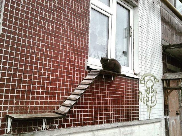 В окне дырку забыли что ли проделать? двор, забота, кормежка, коты, лестница, прикол