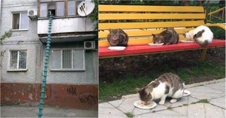 Как вы считаете, это настоящая забота о кошках или вред им? двор, забота, кормежка, коты, лестница, прикол