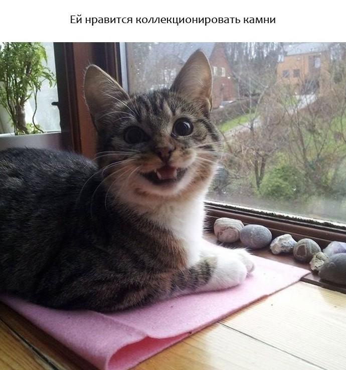 Прикольные животные, которые поднимут вам настроение животные, настроение., позитив, фото