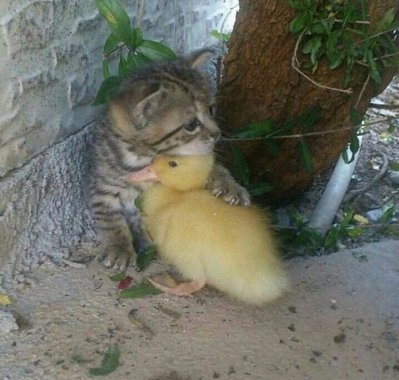 Друзья- во время дождя. животные, настроение., позитив, фото