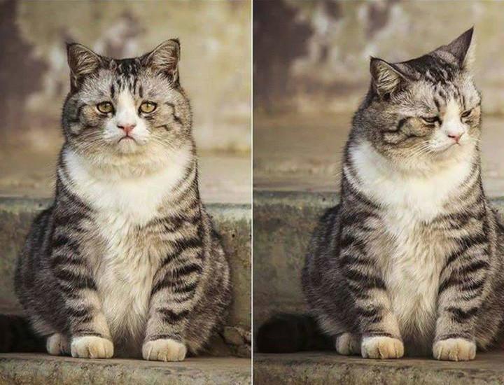 Когда смотришь в зеркало и понимаешь, что похудеть к лету не удалось. животные, настроение., позитив, фото