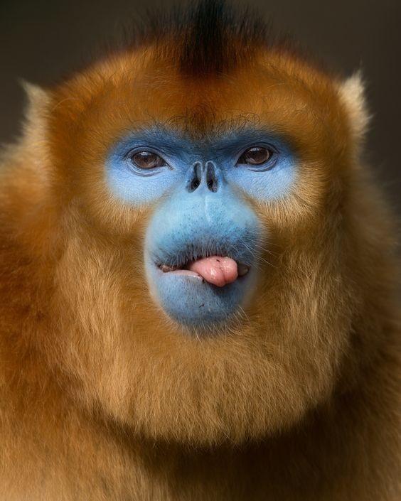 Огромное количество своего свободного времени обезьяны проводят за наведением красоты. интересное, обезьяны, факты, фауна