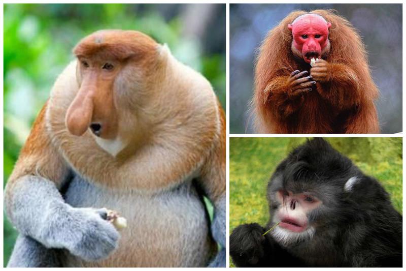 Вопреки распространённому стереотипу, многие виды обезьян бананы не едят. интересное, обезьяны, факты, фауна