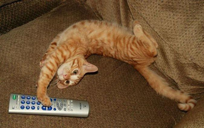 Фотографируют, когда кот лежит в смешной позе домашние питомцы, коты, кошки