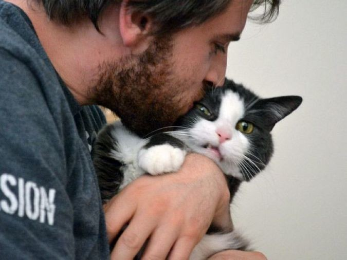 Целуют кота домашние питомцы, коты, кошки