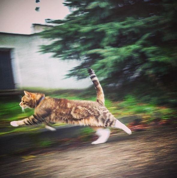 Говорят коту «привет» и «пока», когда он носится как угорелый домашние питомцы, коты, кошки