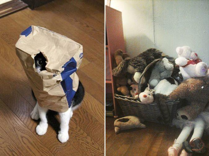 Играют с котом в прятки домашние питомцы, коты, кошки