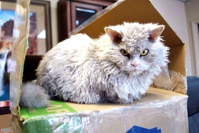 Называют кота глупыми уменьшительно-ласкательными именами типа Пусик, Муля домашние питомцы, коты, кошки