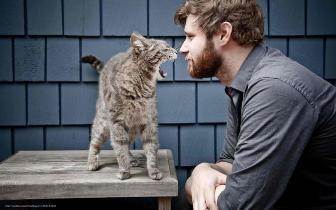 Разговаривают с котом домашние питомцы, коты, кошки