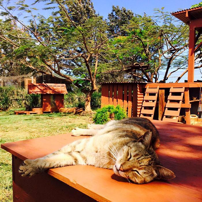 Приют расположен на острове Ланаи гаваи, кошки, приют для кошек