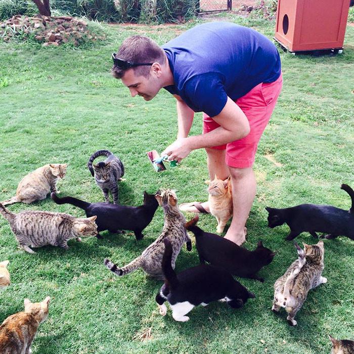 В Ланайском приюте обитает около 500 кошек гаваи, кошки, приют для кошек