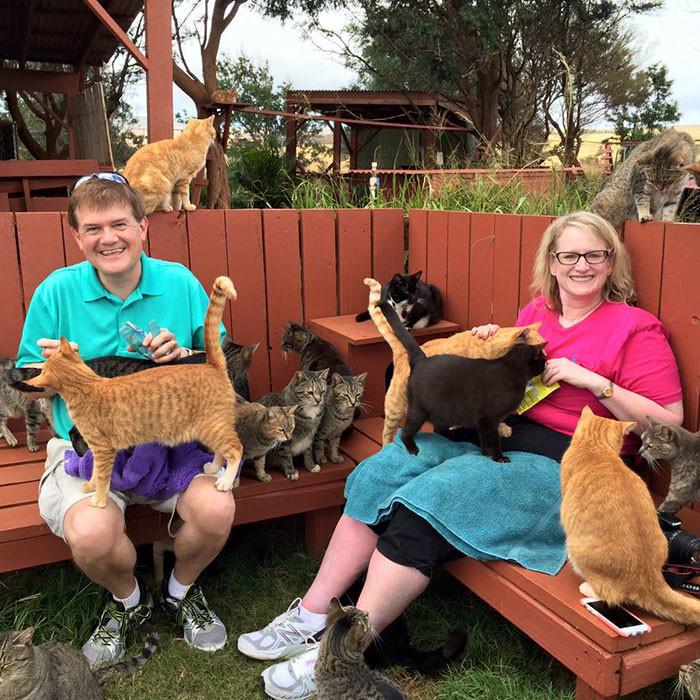 Почему люди со всего света едут потискать этих 500 котиков в приюте на Гаваях гаваи, кошки, приют для кошек