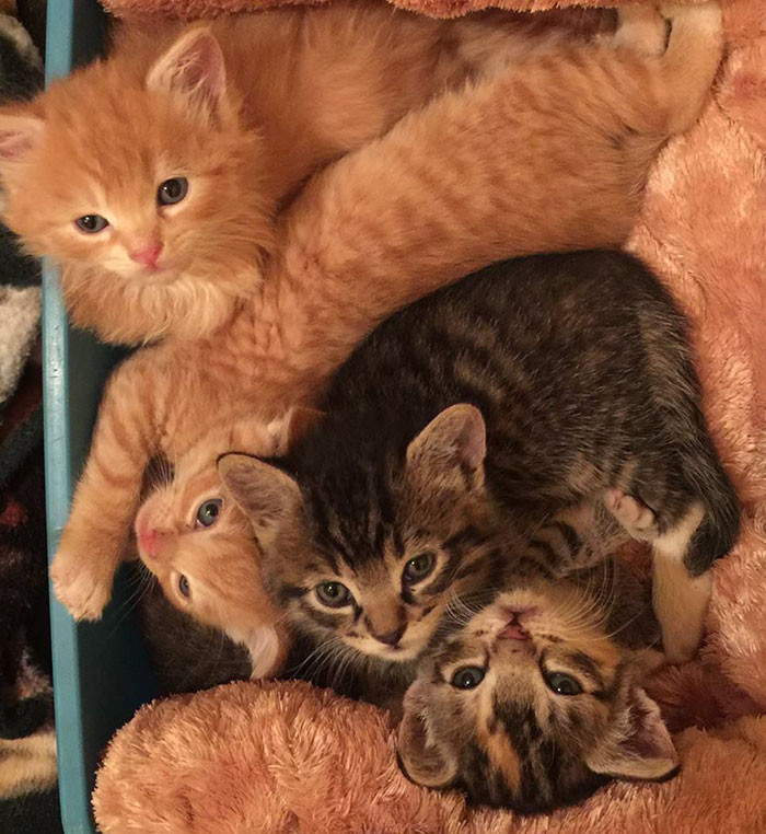 Можно взять себе кошку оттуда или пожертвовать деньги гаваи, кошки, приют для кошек