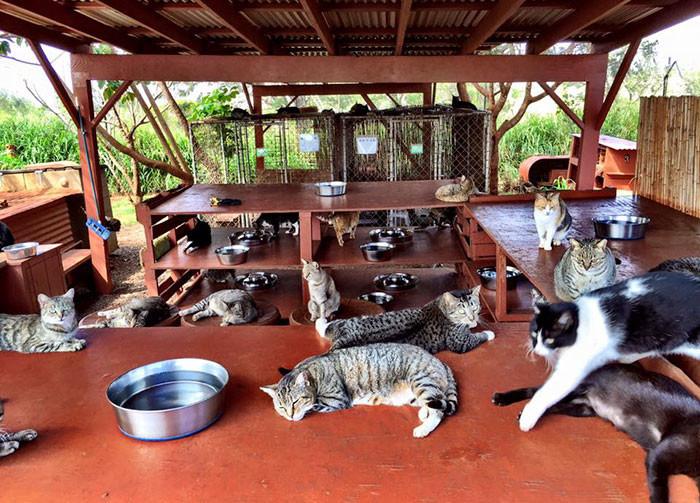 Погладить можно любую из них гаваи, кошки, приют для кошек
