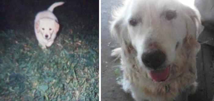 Эти трогательные прощальные снимки домашних любимцев заставят вас расплакаться домашние животные, кошки, любовь к братьям меньшим, собаки, фото